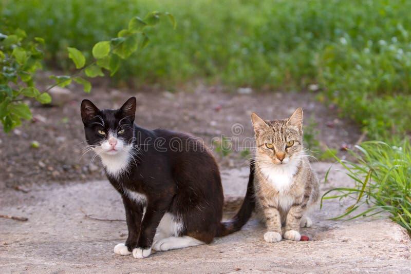 Deux chats, noir et gris sérieux, reposent et regardent la caméra photographie stock libre de droits