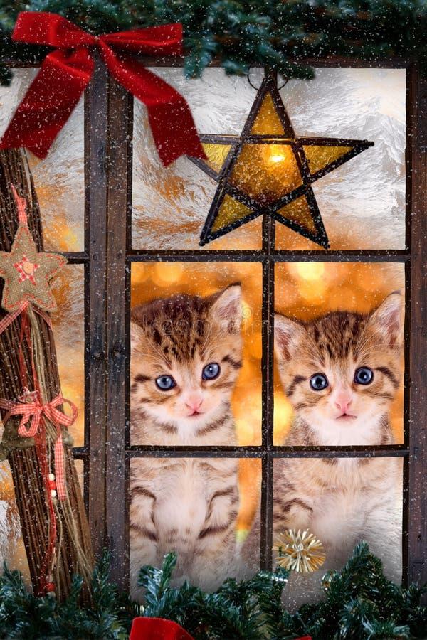 Deux chats regardant une fenêtre avec des décorations de Noël photo stock