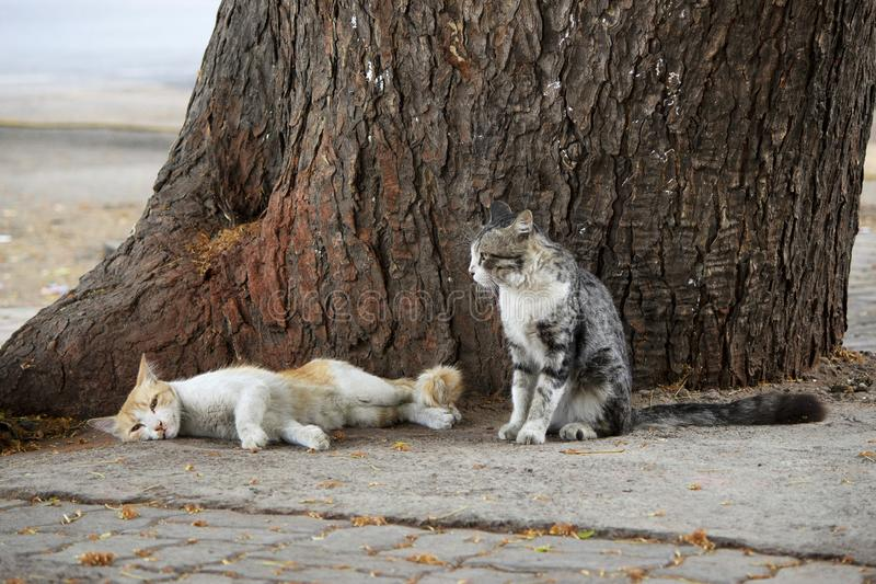 Deux chats se reposant sur le tronc d'arbre, Pune, maharashtra, Inde images libres de droits