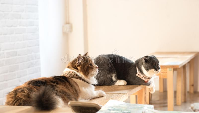 Deux chats sur la table photo libre de droits