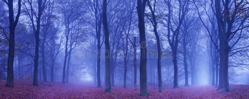 Deux chemins dans une forêt foncée et brumeuse, Pays-Bas images stock