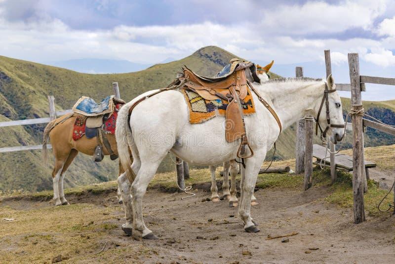 Deux chevaux attachés à la colline Quito Equateur de Panecillo photo libre de droits