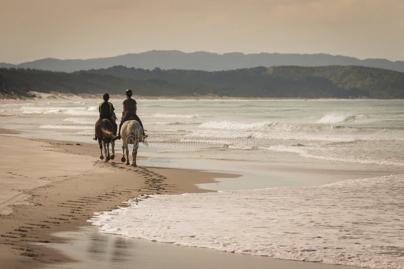 Deux chevaux avec des cavaliers sur la plage sablonneuse images stock