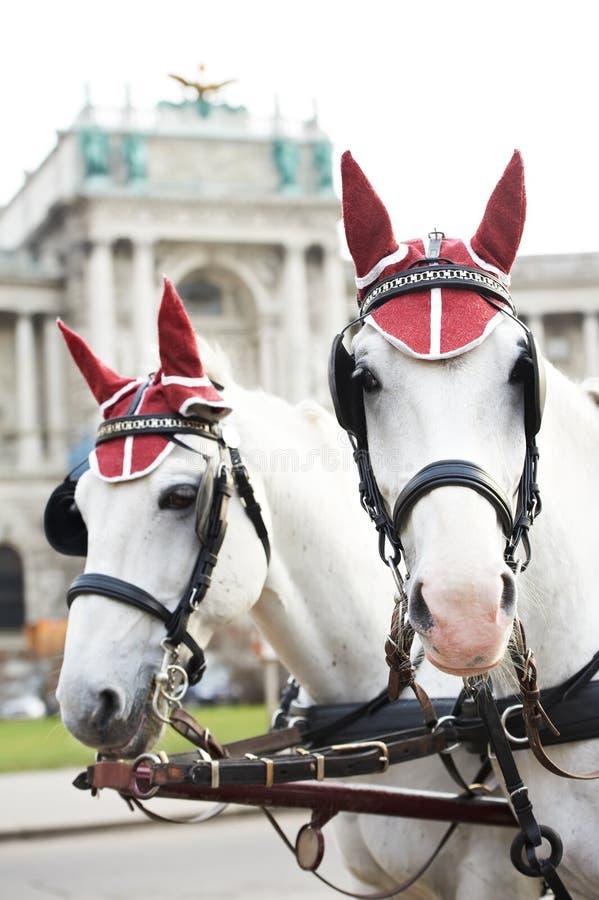 Deux chevaux avec le harnais image libre de droits