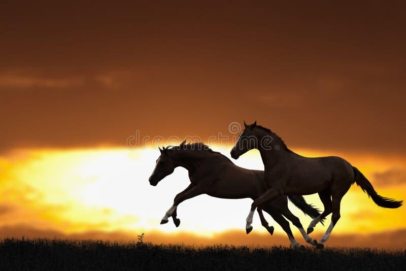 Deux chevaux courants photo libre de droits