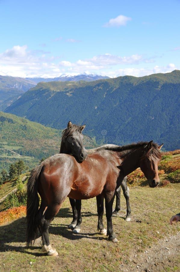 Deux chevaux dans les montagnes image libre de droits