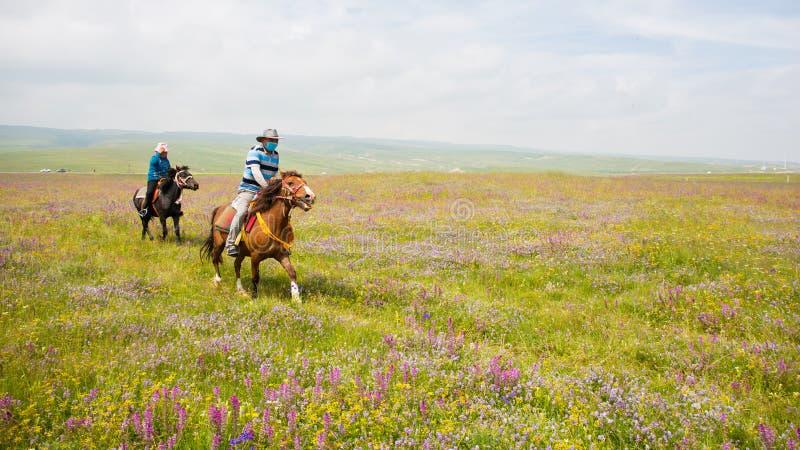 Deux chevaux de tour de bergers sur des prés images stock
