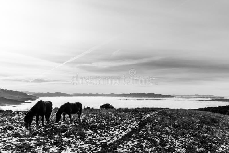 Deux chevaux rétro-éclairés, mangeant l'herbe, sur une montagne, avec le som photo libre de droits