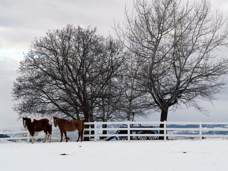Deux chevaux un jour de l'hiver images libres de droits