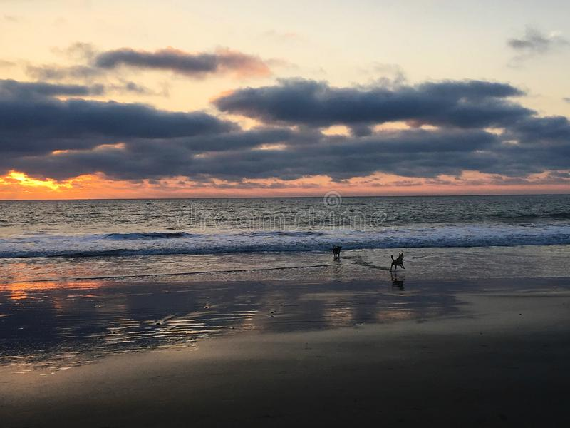 Deux chiens courus sur la plage en Equateur image stock