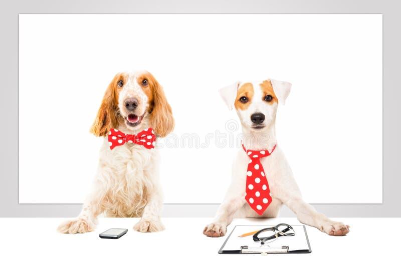 Deux chiens d'affaires photo stock