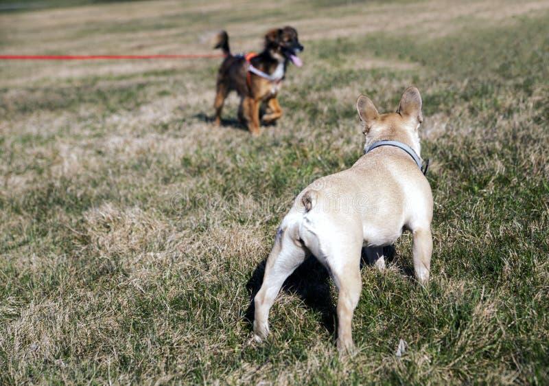 Deux chiens regardant l'un l'autre photo libre de droits