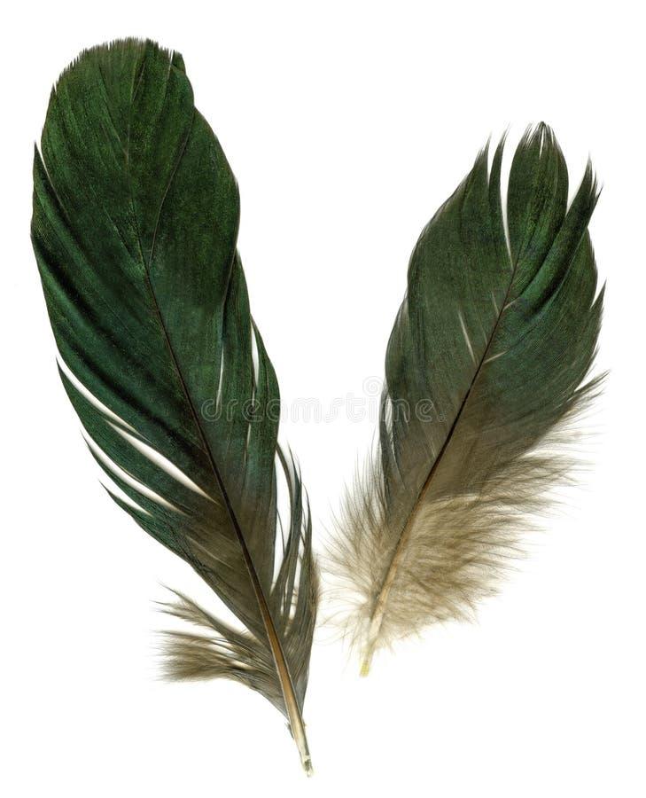 Deux clavettes de corbeau photos libres de droits