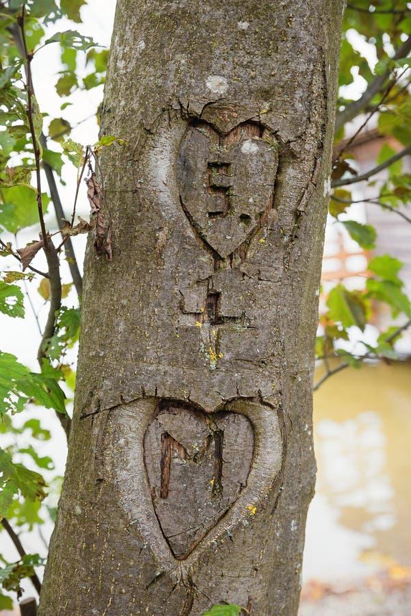 Deux coeurs avec des initiales, découpées dans une écorce d'arbre photos libres de droits