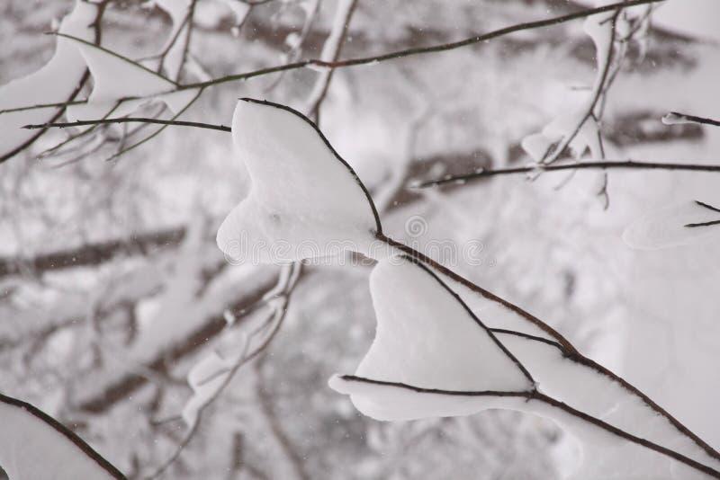 Deux coeurs dans la neige image stock