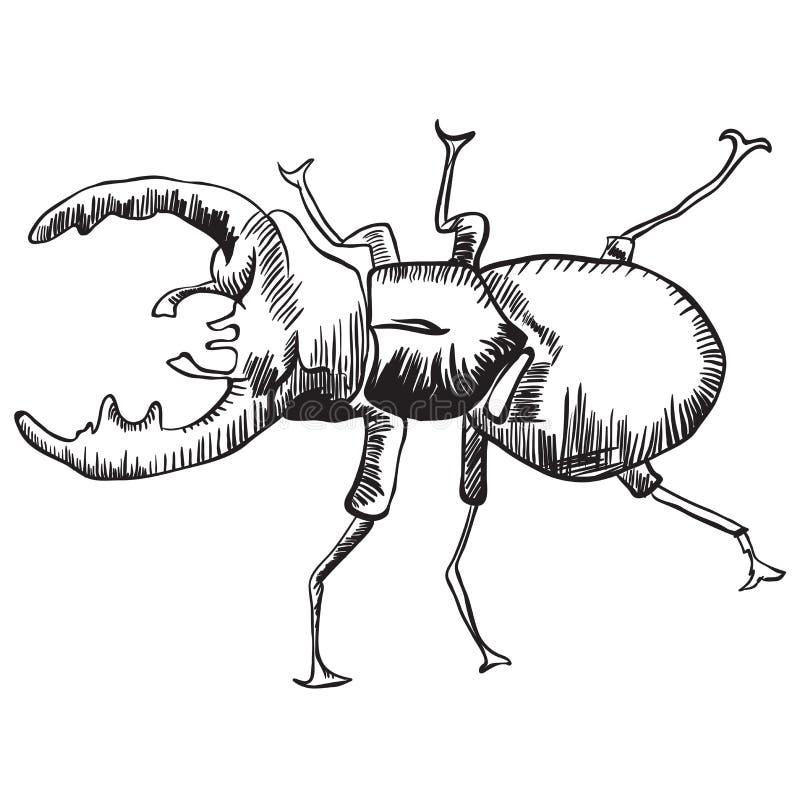 Deux coléoptères de mâle illustration stock