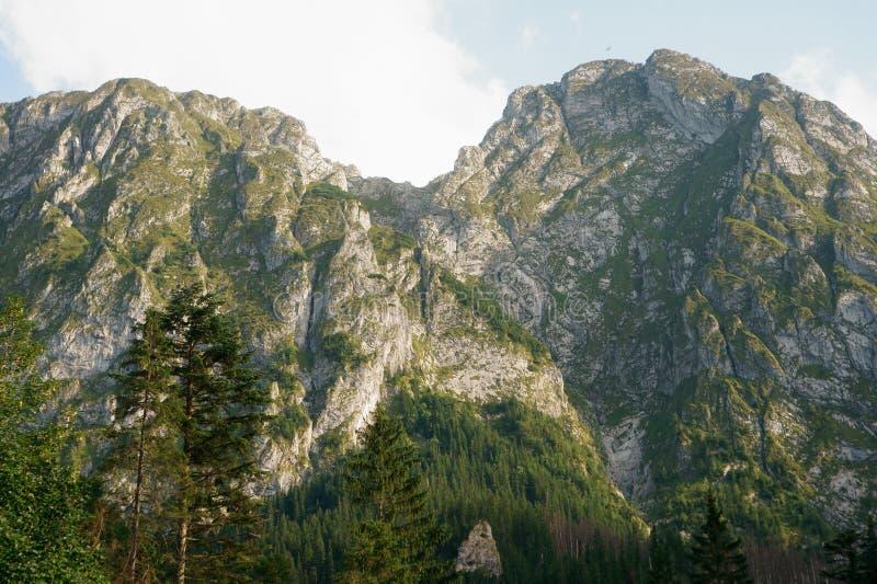Deux collines avec l'herbe sur des roches image libre de droits