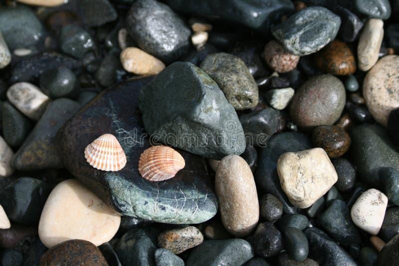 Deux coquillages et cailloux sur une plage images stock
