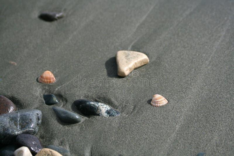 Deux coquillages et cailloux sur une plage images libres de droits