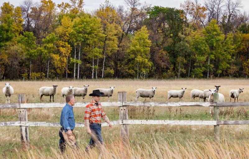 Deux cowboys caucasiens de ferme marchant le long du côté la barrière avec des moutons de l'autre côté photo stock