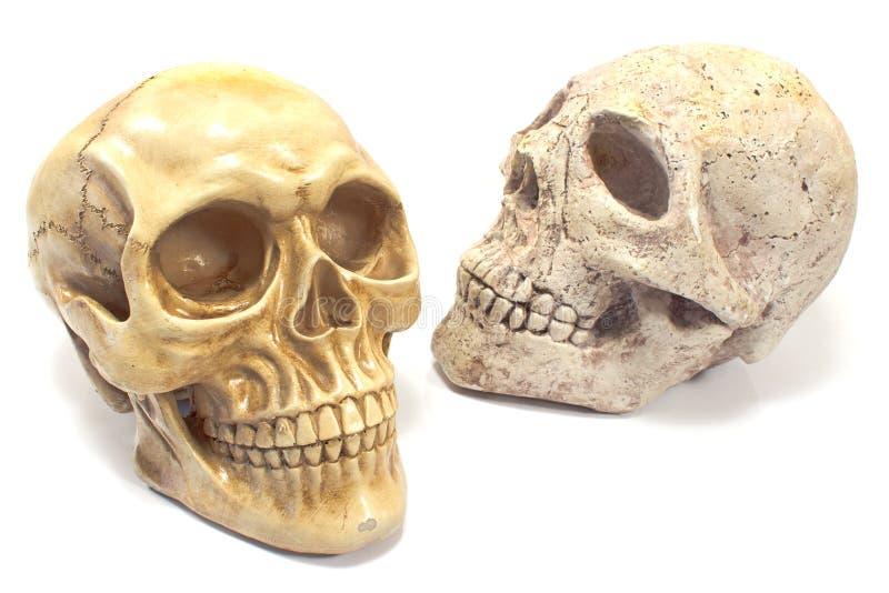 Deux crânes humains photos stock