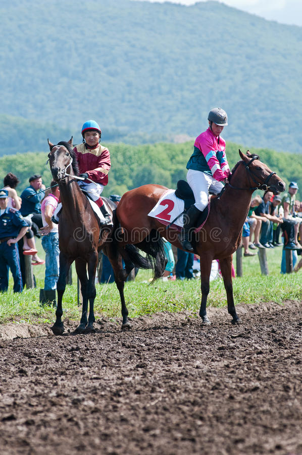 Deux curseurs sur le cheval de pur sang avant le début photo libre de droits