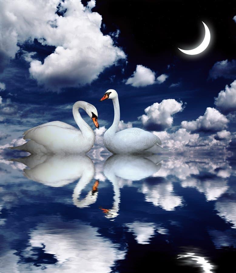 Deux cygnes illustration libre de droits