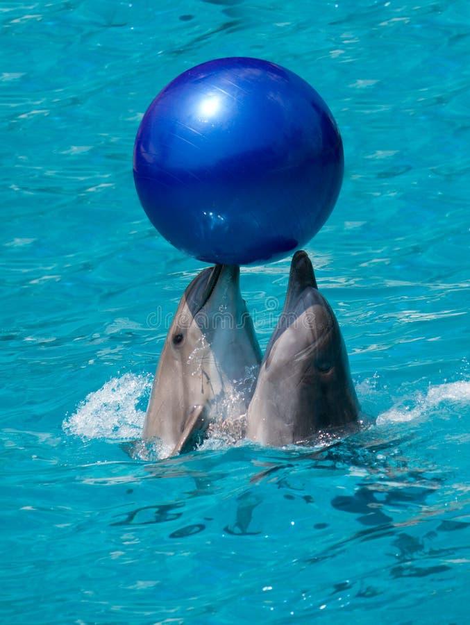 Deux dauphins avec la bille photographie stock