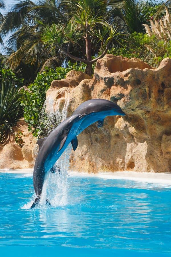 Deux dauphins sautants image libre de droits