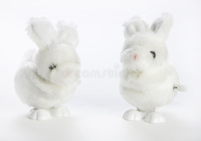 Deux enroulent vers le haut des lapins image stock
