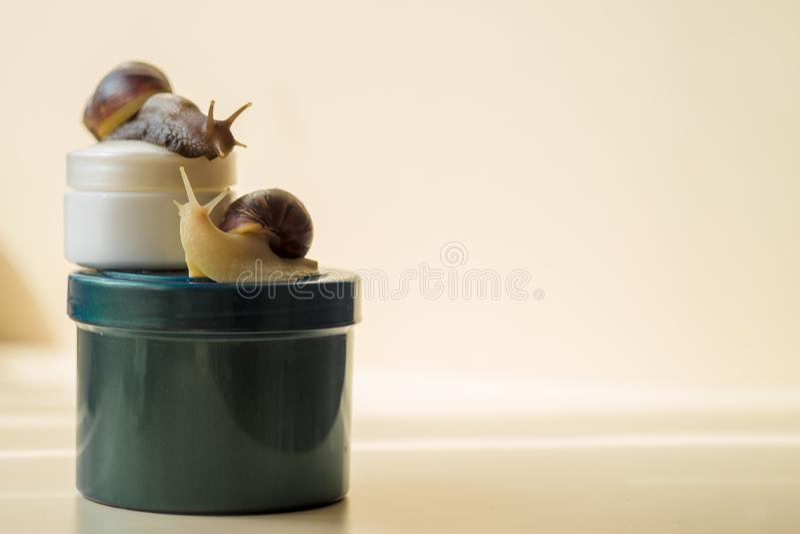 Deux escargots et cosm?tiques d'Achatina sur le fond clair Macro photographie en gros plan extr?me Mollusques sur les pots Anti-v image libre de droits