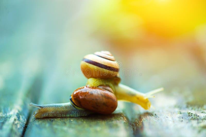 Deux escargots se déplaçant des directions opposées, une vieille surface en bois images stock