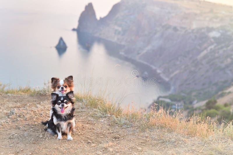 deux falaises de chien photos libres de droits