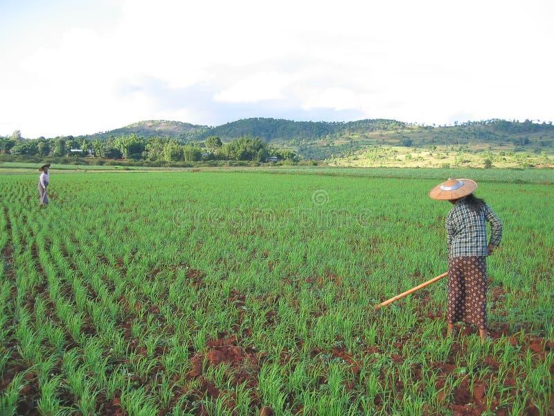 Deux femmes de fermier photographie stock