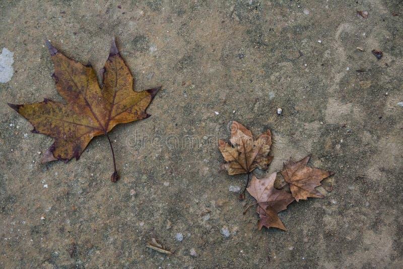 Deux feuilles dans la forêt image stock