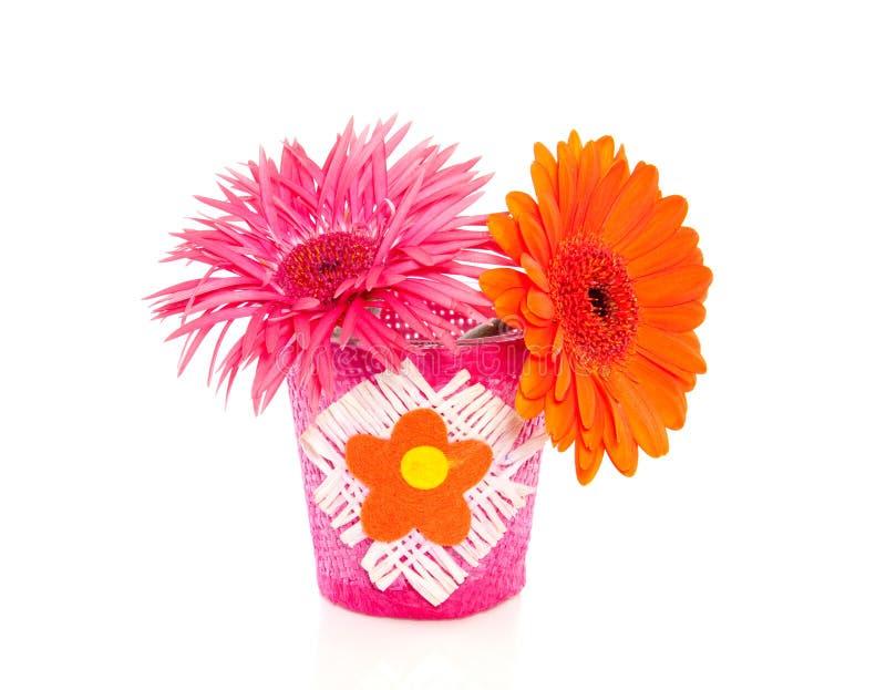 Deux fleurs colorées de gerber photo libre de droits