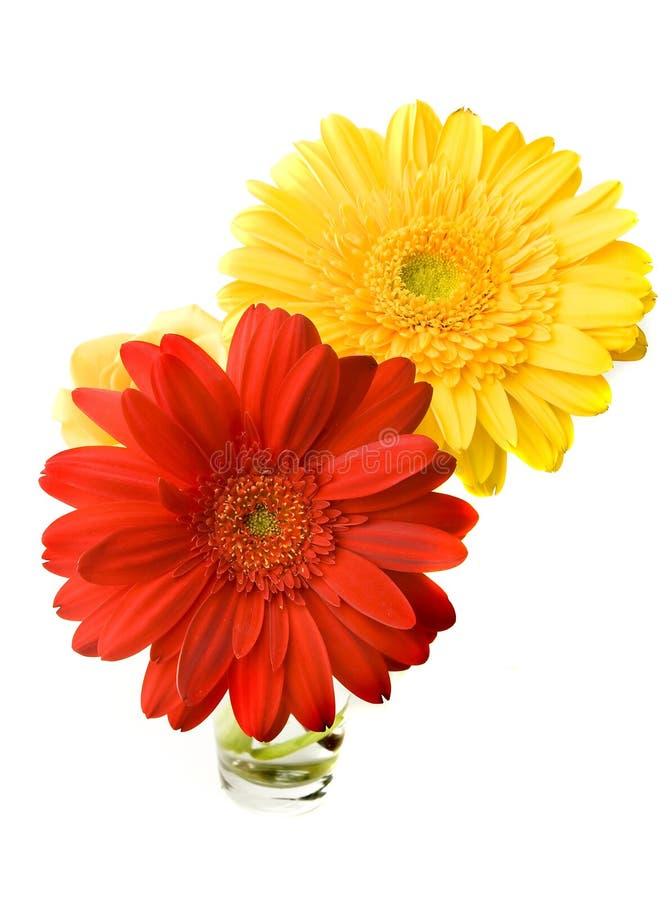 Deux fleurs de Gerber photos stock