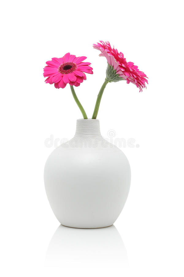 Deux fleurs roses de gerbera dans le vase blanc photo stock