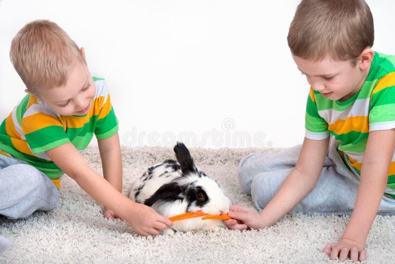 Deux frères alimentent leur lapin aimé avec une carotte images libres de droits