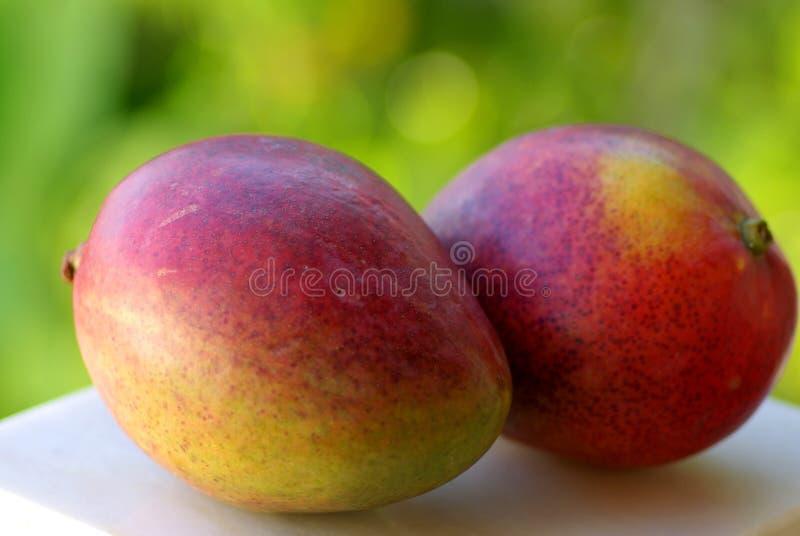 Deux fruits de mangues photo stock