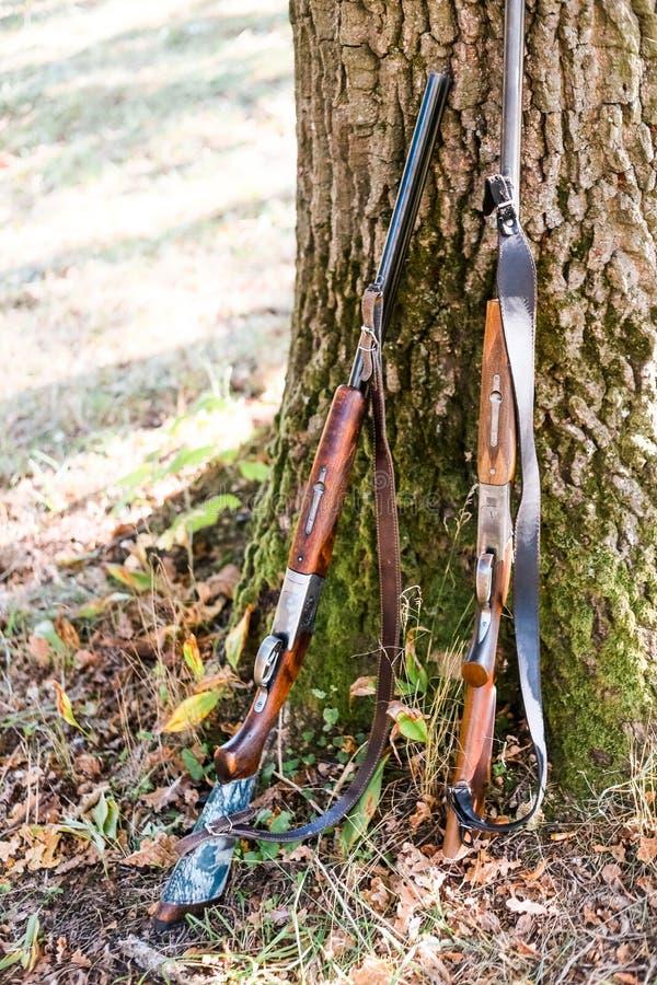 Deux fusils de chasse de chasse tiennent la forêt proche d'arbre photo libre de droits