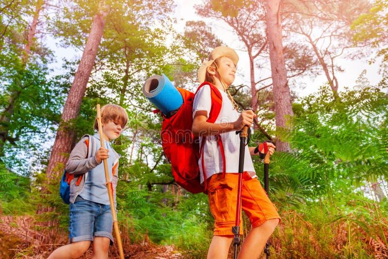 Deux garçons avec des sacs à dos sur la hausse dans la forêt image stock
