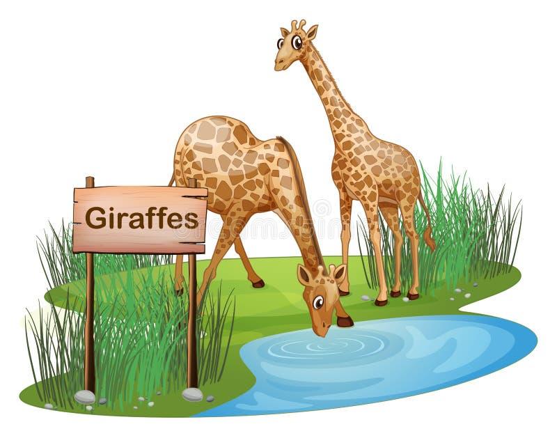 Deux girafes à l'étang près d'une enseigne illustration de vecteur