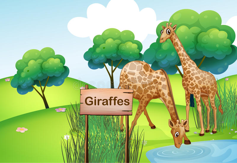 Deux girafes à la forêt avec un signe en bois embarquent illustration stock