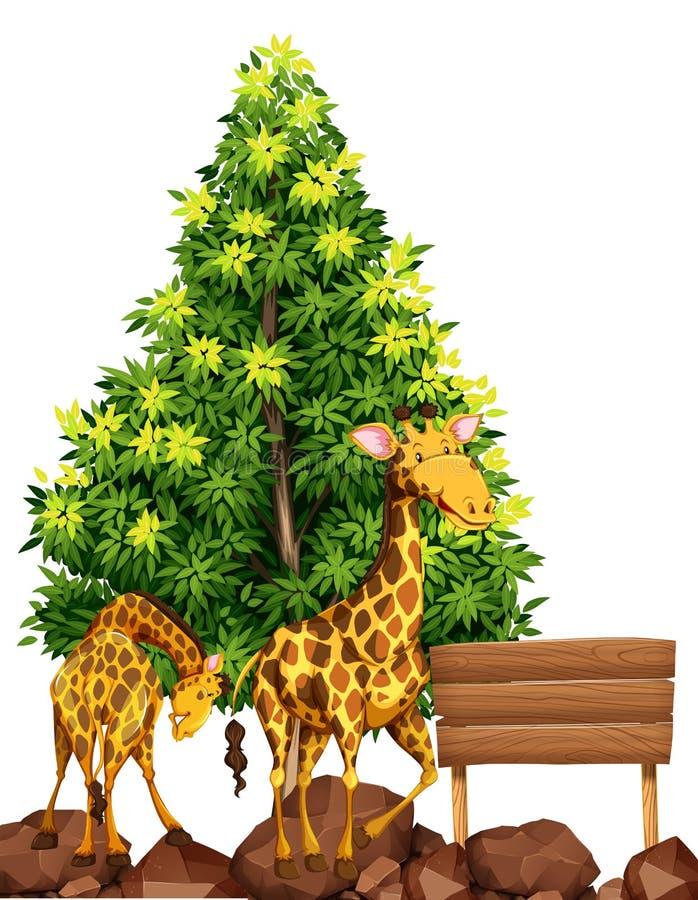 Deux girafes par le signe en bois illustration libre de droits