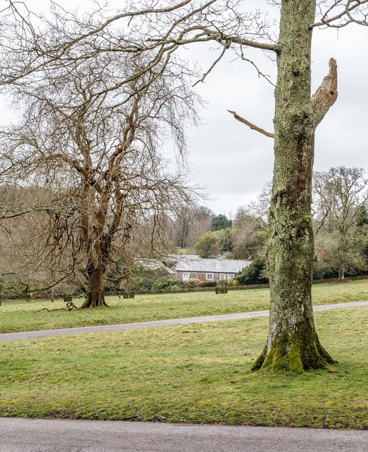 Deux grands arbres dans les pelouses photos libres de droits