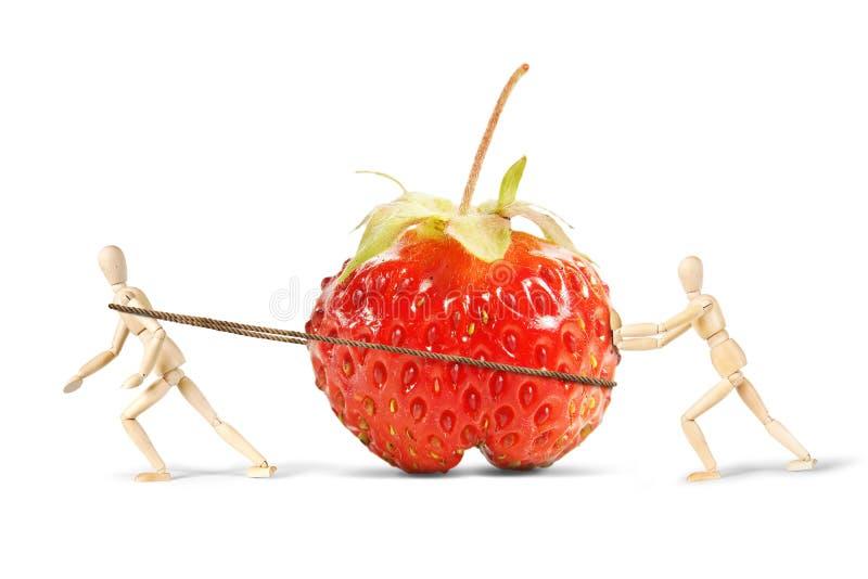 Deux hommes traînent une fraise mûre énorme images stock