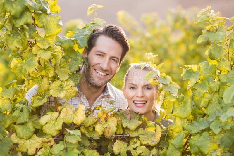 Deux jeunes négociants en vins heureux regardant l'appareil-photo par derrière les usines de raisin photo stock