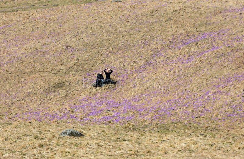 Deux jeunes touristes s'asseyant sur le pré de montagne avec le crocus fleurit la floraison, vallée de Chocholowska photos libres de droits