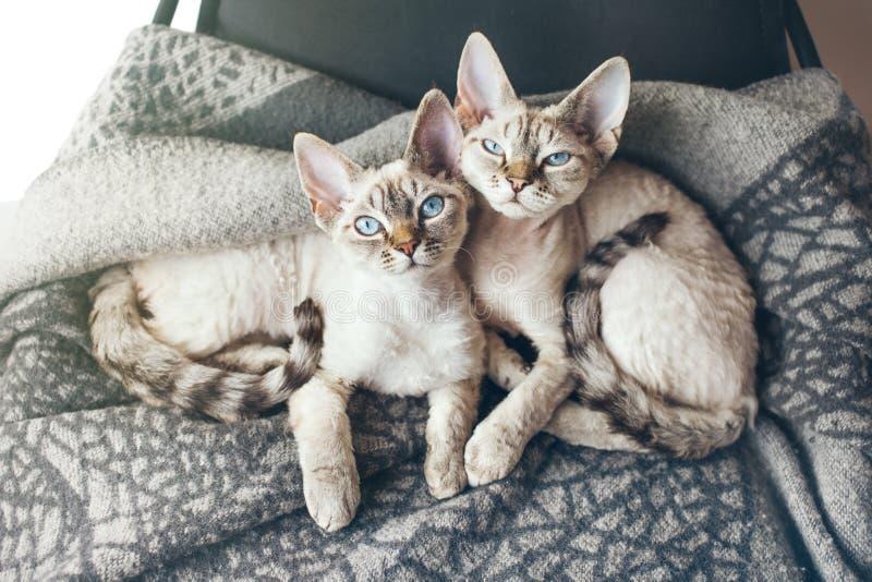 Deux jolis chatons sur le fauteuil se reposant Effet de fusée de lumière de Sun photographie stock